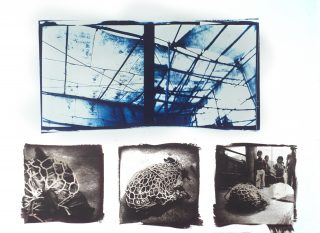 Cyanotype & vandyke-processed photos of a Guatemalan market, a hog in a net