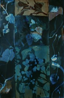 Vandyke brown and cyanotype prints of leaves and vines, collaged together to make one larger piece